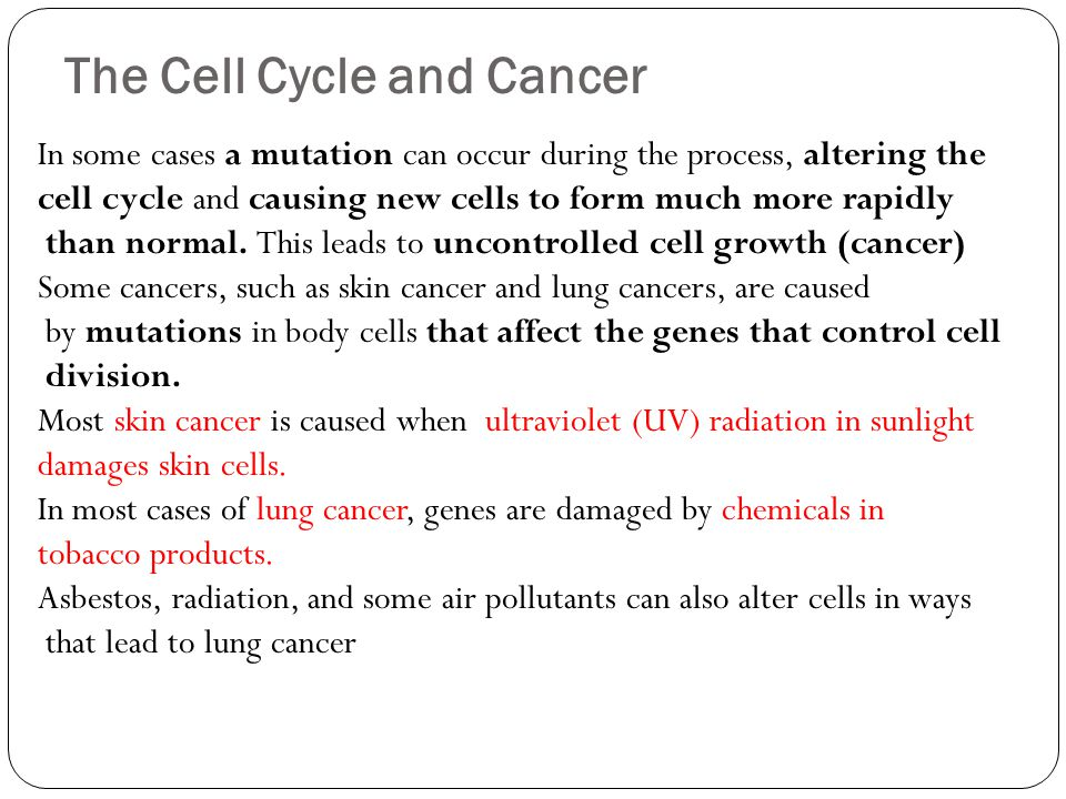 The Cell Cycle and Cancer In some cases a mutation can occur during the process, altering the cell cycle and causing new cells to form much more rapid