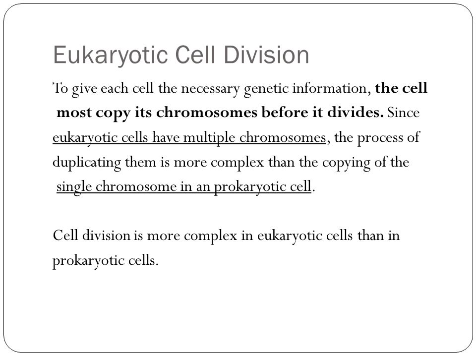 Eukaryotic Cell Division To give each cell the necessary genetic information, the cell most copy its chromosomes before it divides. Since eukaryotic c