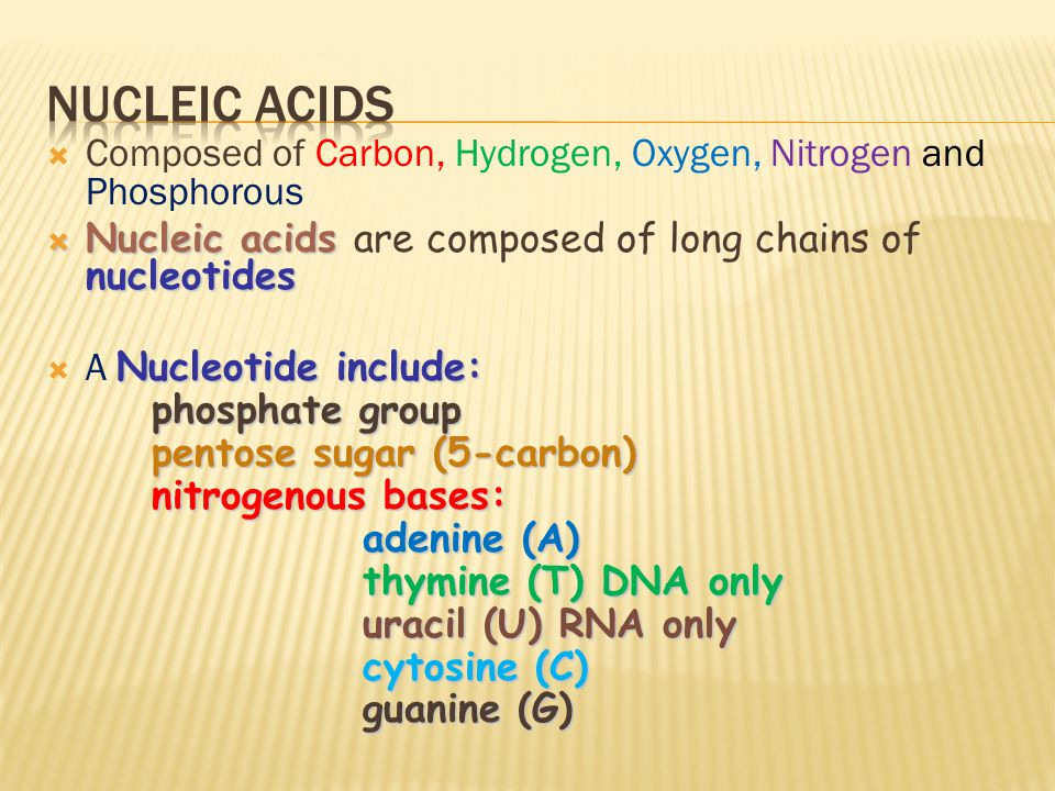  Composed of Carbon, Hydrogen, Oxygen, Nitrogen and Phosphorous  Nucleic acids nucleotides  Nucleic acids are composed of long chains of nucleotides Nucleotide include:  A Nucleotide include: phosphate group pentose sugar (5-carbon) nitrogenous bases: adenine (A) thymine (T) DNA only uracil (U) RNA only cytosine (C) guanine (G)