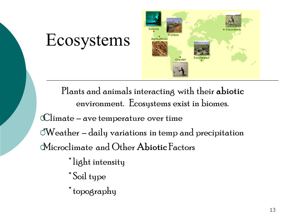 Plants and animals interacting with their abiotic environment.