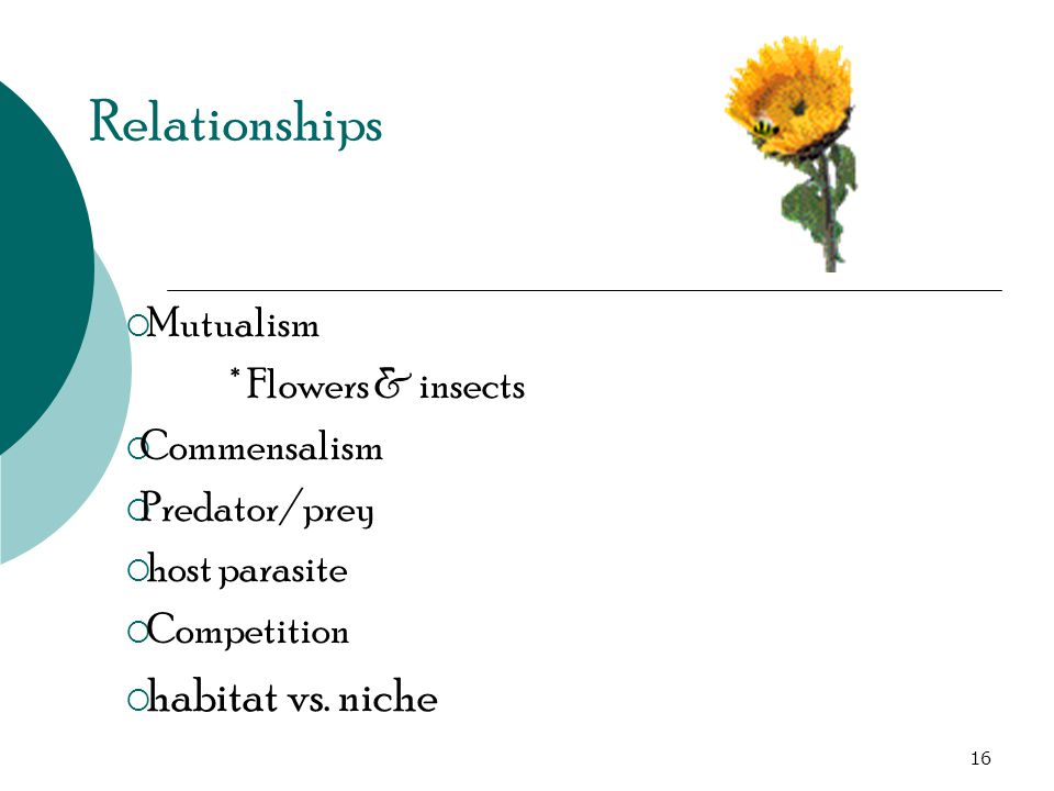 Relationships  Mutualism * Flowers & insects  Commensalism  Predator/prey  host parasite  Competition  habitat vs.