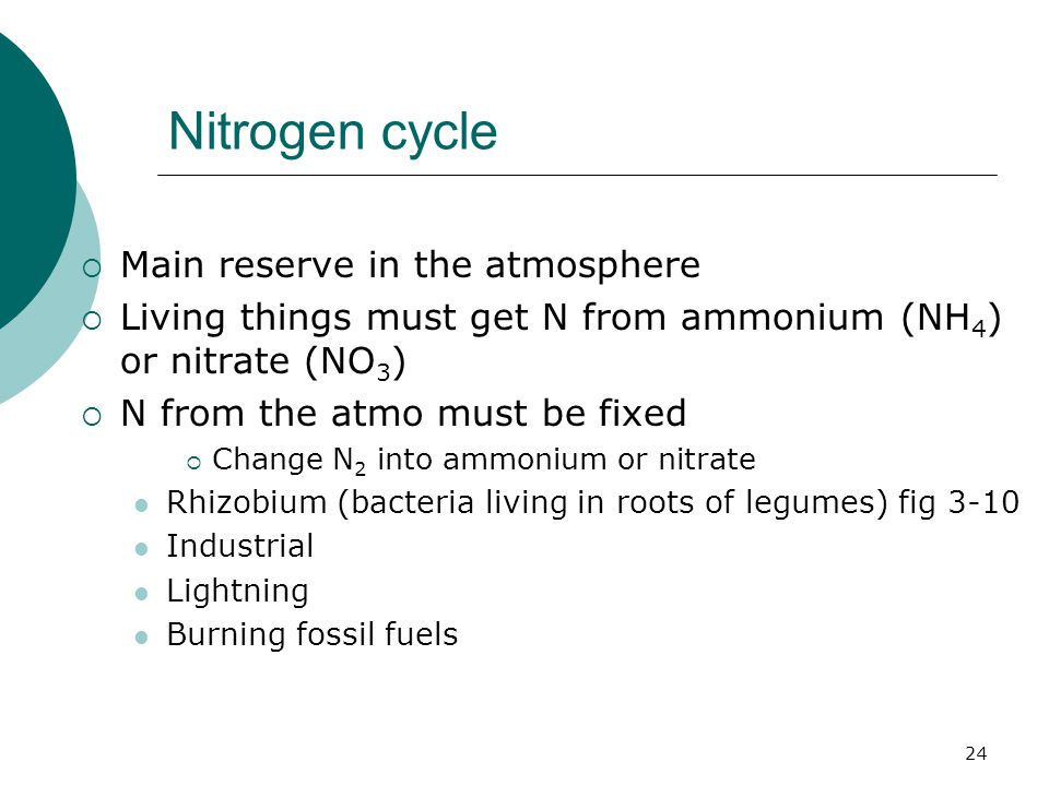 Nitrogen cycle  Main reserve in the atmosphere  Living things must get N from ammonium (NH 4 ) or nitrate (NO 3 )  N from the atmo must be fixed  Change N 2 into ammonium or nitrate Rhizobium (bacteria living in roots of legumes) fig 3-10 Industrial Lightning Burning fossil fuels 24