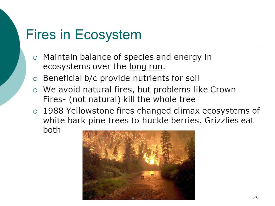 Fires in Ecosystem  Maintain balance of species and energy in ecosystems over the long run.