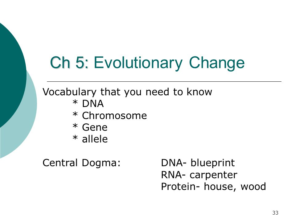 Ch 5: Ch 5: Evolutionary Change Vocabulary that you need to know * DNA * Chromosome * Gene * allele Central Dogma: DNA- blueprint RNA- carpenter Protein- house, wood 33