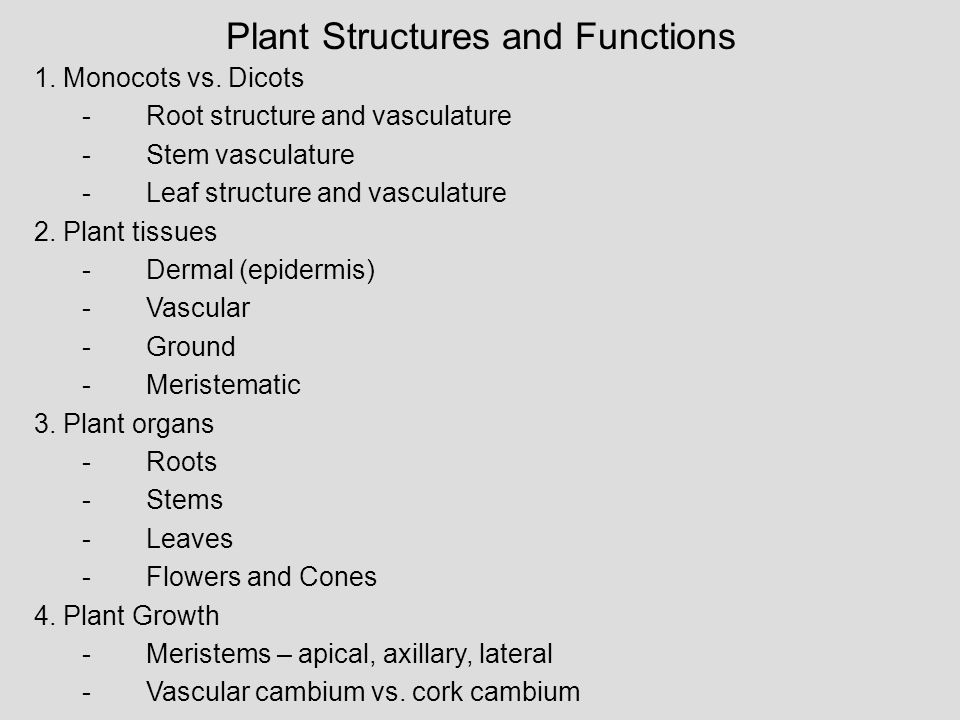 Plant Structures and Functions 1. Monocots vs. Dicots -Root structure and vasculature -Stem vasculature -Leaf structure and vasculature 2. Plant tissu
