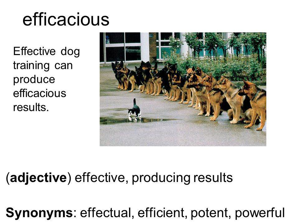 efficacious (adjective) effective, producing results Synonyms: effectual, efficient, potent, powerful Effective dog training can produce efficacious results.