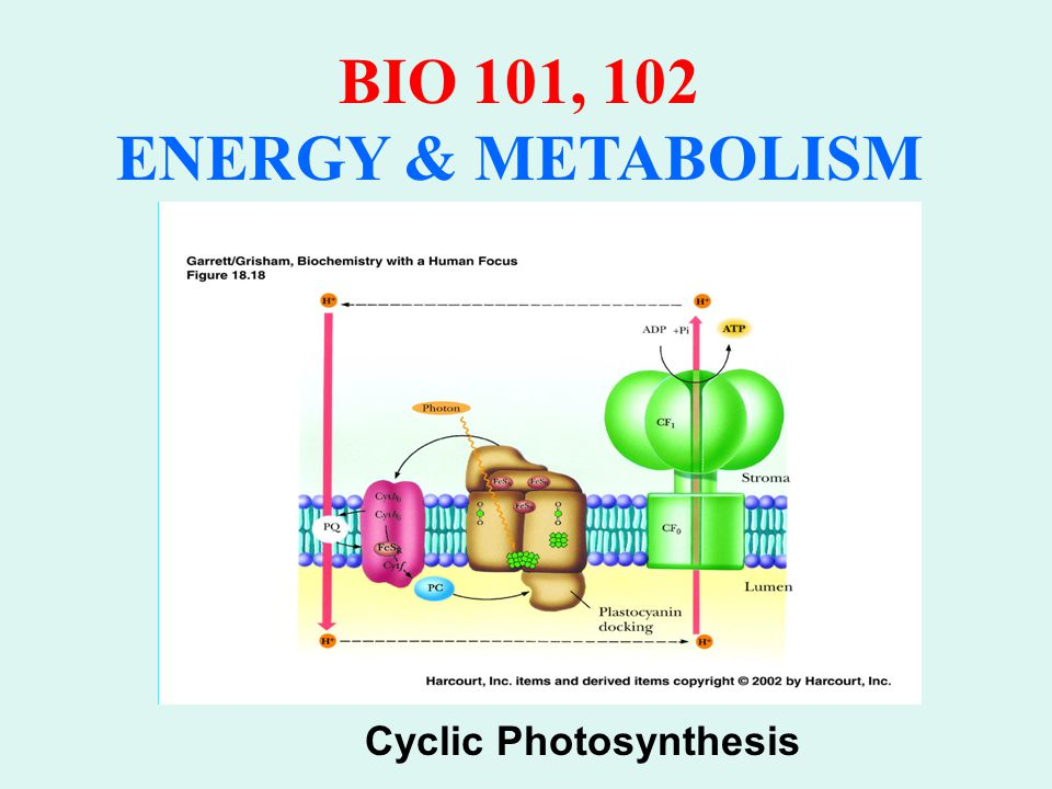 BIO 101, 102 ENERGY & METABOLISM Cyclic Photosynthesis