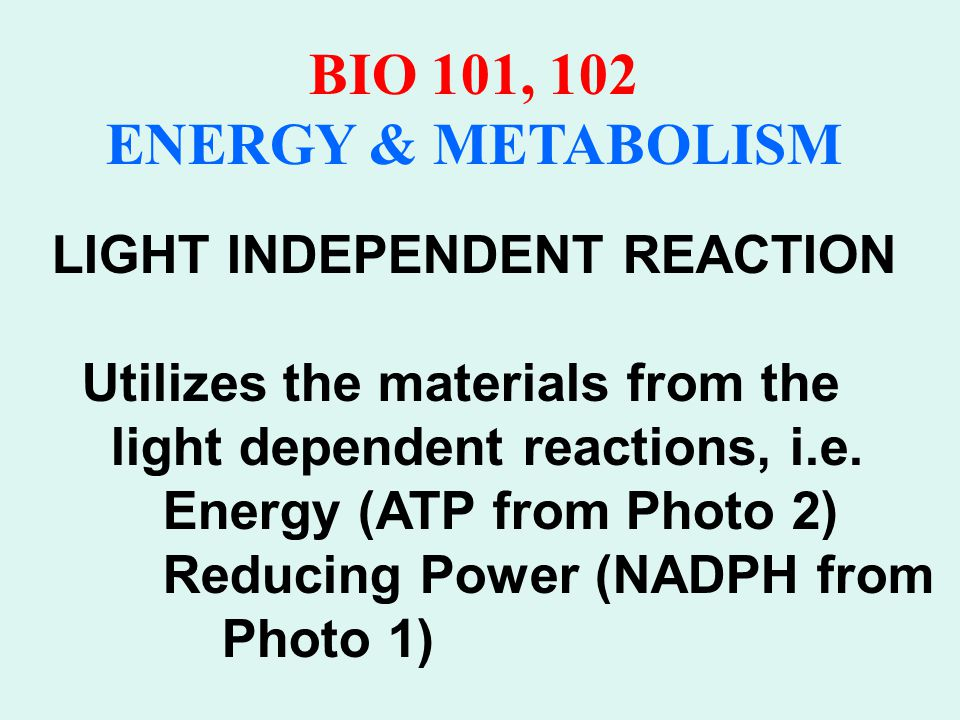 PHOTOSYNTHESIS CALVIN CYCLE 3CO 2 + 9ATP + 6NADPH + water reacts to yield 3-PGA + 8P i + 9ADP + 6 NADP +