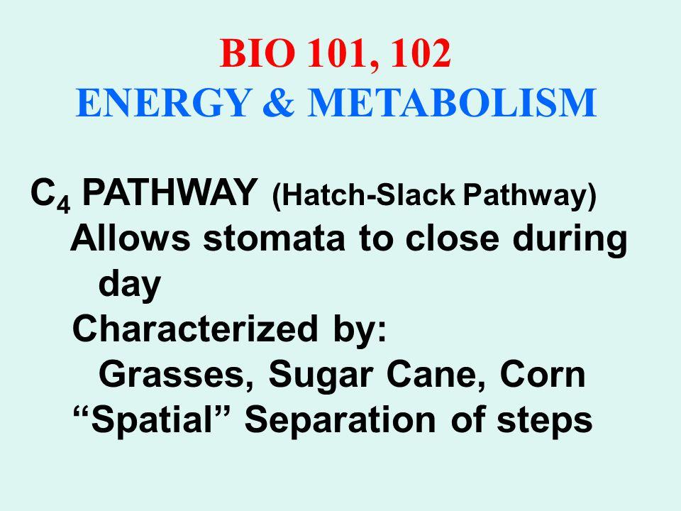 BIO 101, 102 ENERGY & METABOLISM C 4 Pathway