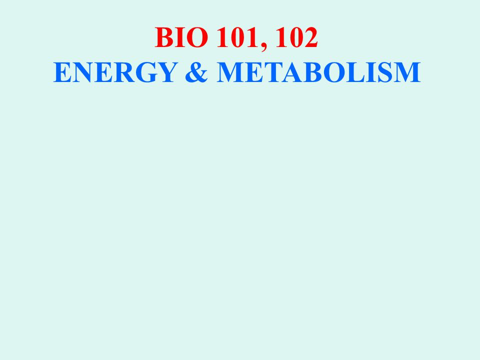 AP BIOLOGY ENERGY & METABOLISM