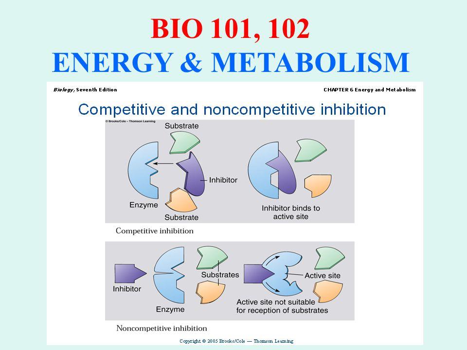 BIO 101, 102 ENERGY & METABOLISM ENZYMES: Factors Affecting Activity: Activation Activators Maintain active configuration