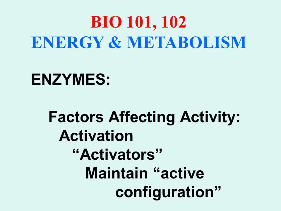 BIO 101, 102 ENERGY & METABOLISM ENZYME COFACTORS: Usually inorganic substances e.g.