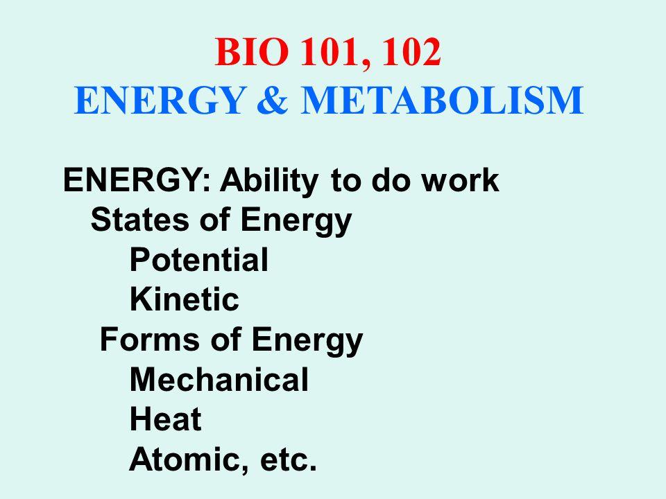 BIO 101, 102 ENERGY & METABOLISM Potential Energy Kinetic Energy