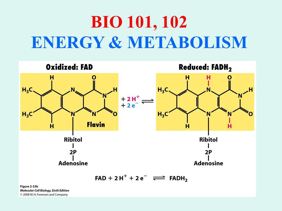 BIO 101, 102 ENERGY & METABOLISM COENZYME NADH