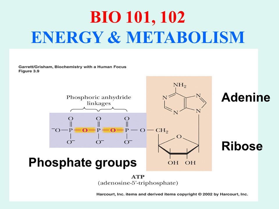 BIO 101, 102 ENERGY & METABOLISM Energy (Potential) stored in bond Yields 7.3 kcal/mol when ATP  ADP Provides energy for most endergonic reactions Coupled Reactions