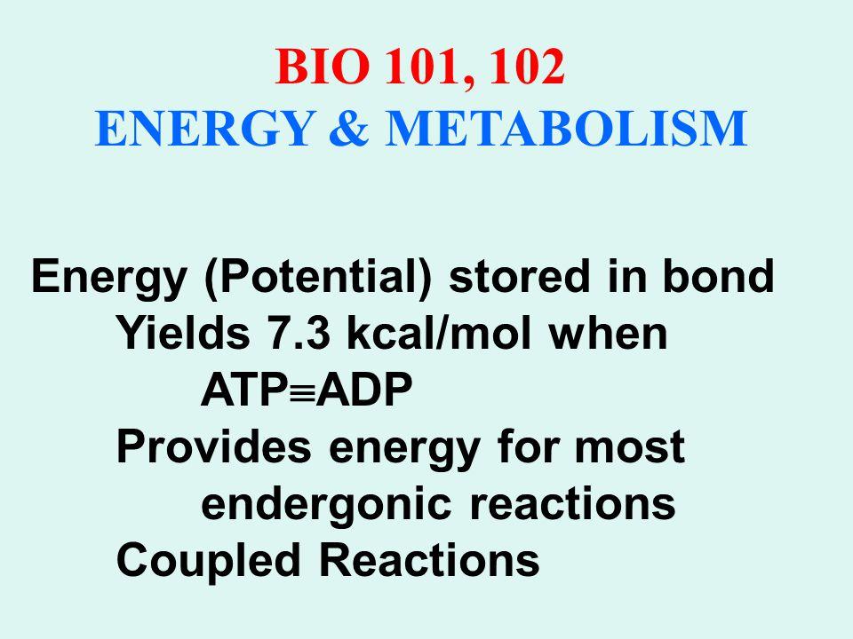 BIO 101, 102 ENERGY & METABOLISM EVOLUTION OF METABOLISM 1.