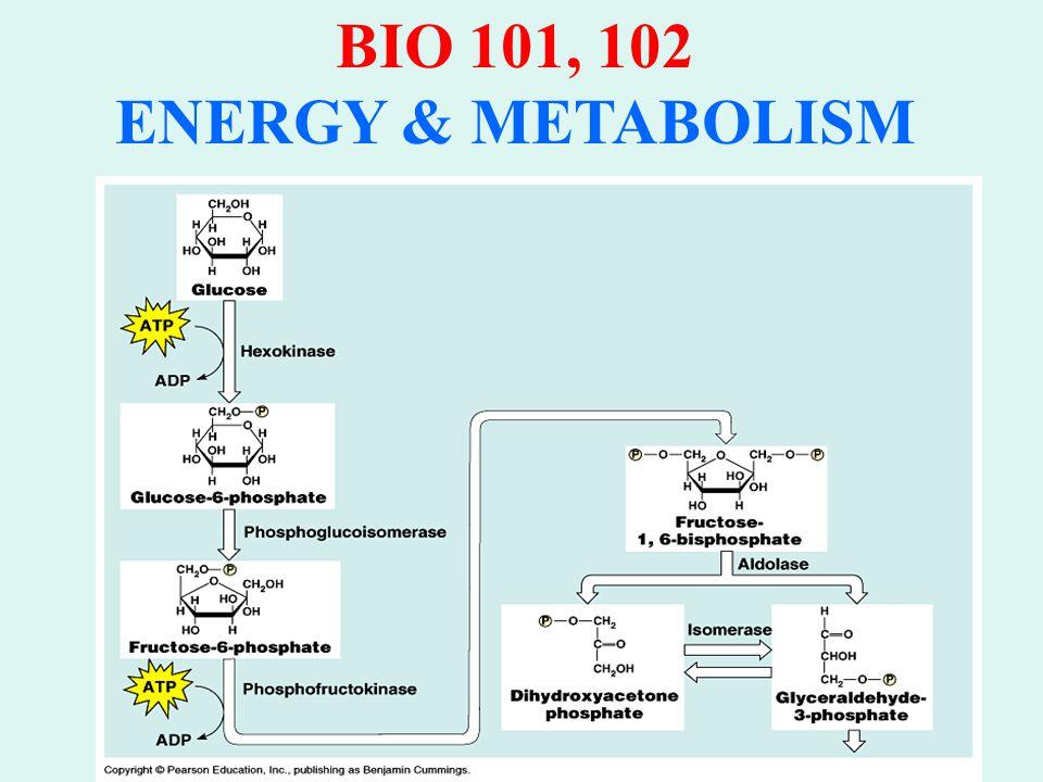 BIO 101, 102 ENERGY & METABOLISM A.GLYCOLYSIS: 2.