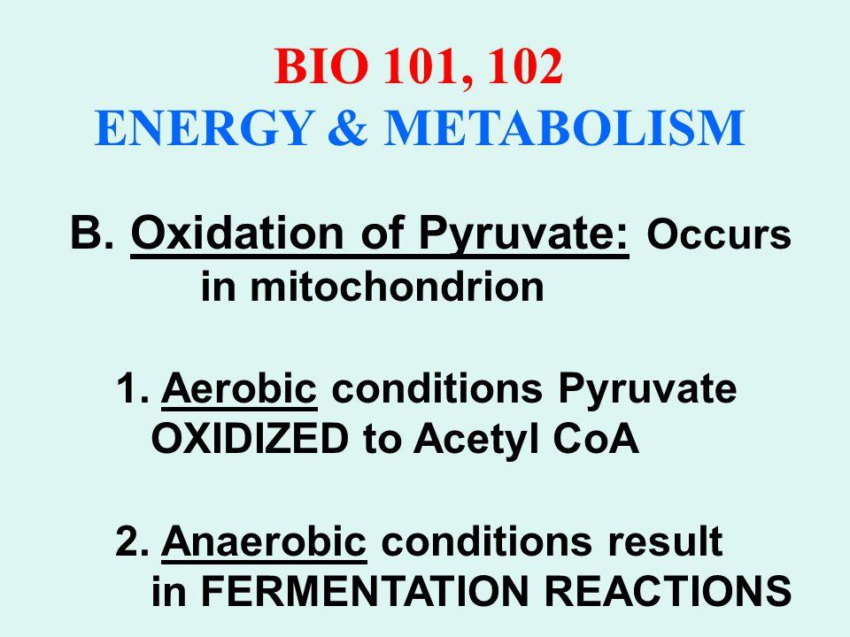 BIO 101, 102 ENERGY & METABOLISM Metabolism of Pyruvate