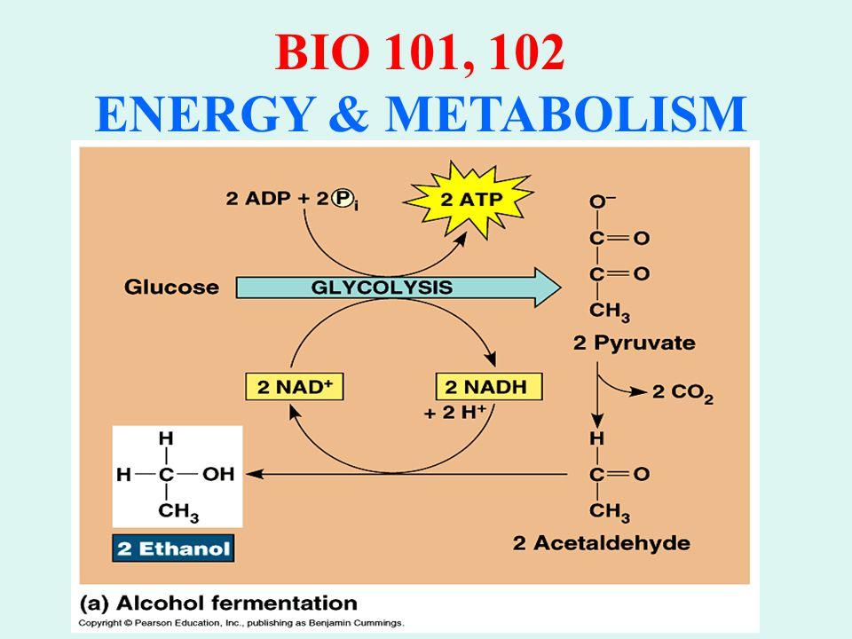BIO 101.102 ENERGY & METABOLISM C. KREBS CYCLE: 1.