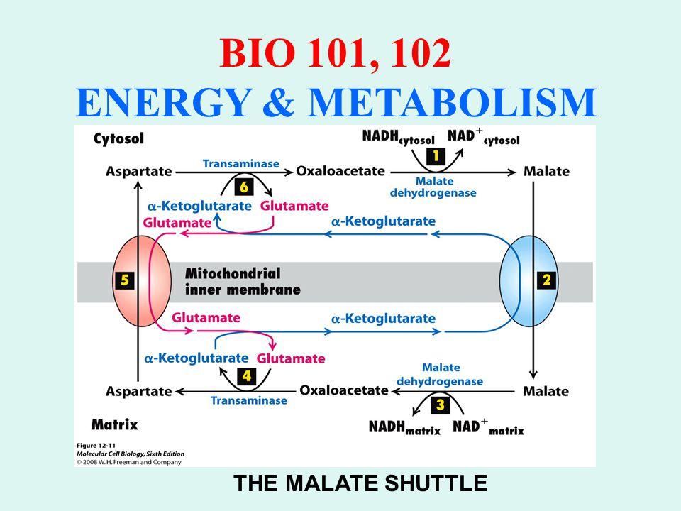 BIO 101, 102 ENERGY & METABOLISM D.