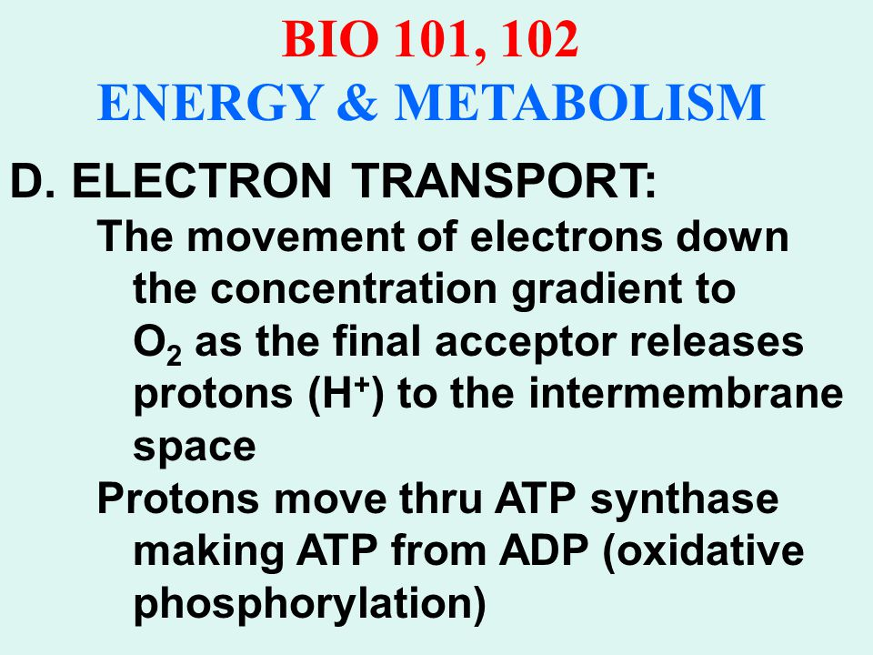 BIO 101, 102 ENERGY & METABOLISM Four major components of electron trans- port system