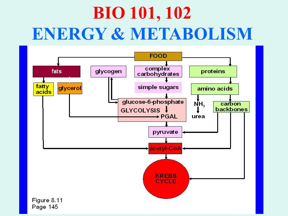 BIO 101, 102 ENERGY & METABOLISM Control of Glucose Catabolism Feedback inhibition Phosphofructokinase inhibited by: ATP levels Citrate levels Phosphofructokinase stimulated by ADP levels AMP levels