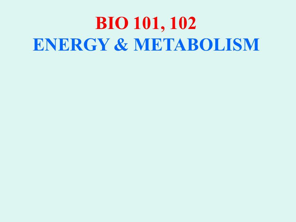 BIO 101, 102 ENERGY & METABOLISM PHOTOSYNTHESIS: LIGHT DEPENDENT REACTIONS 1.