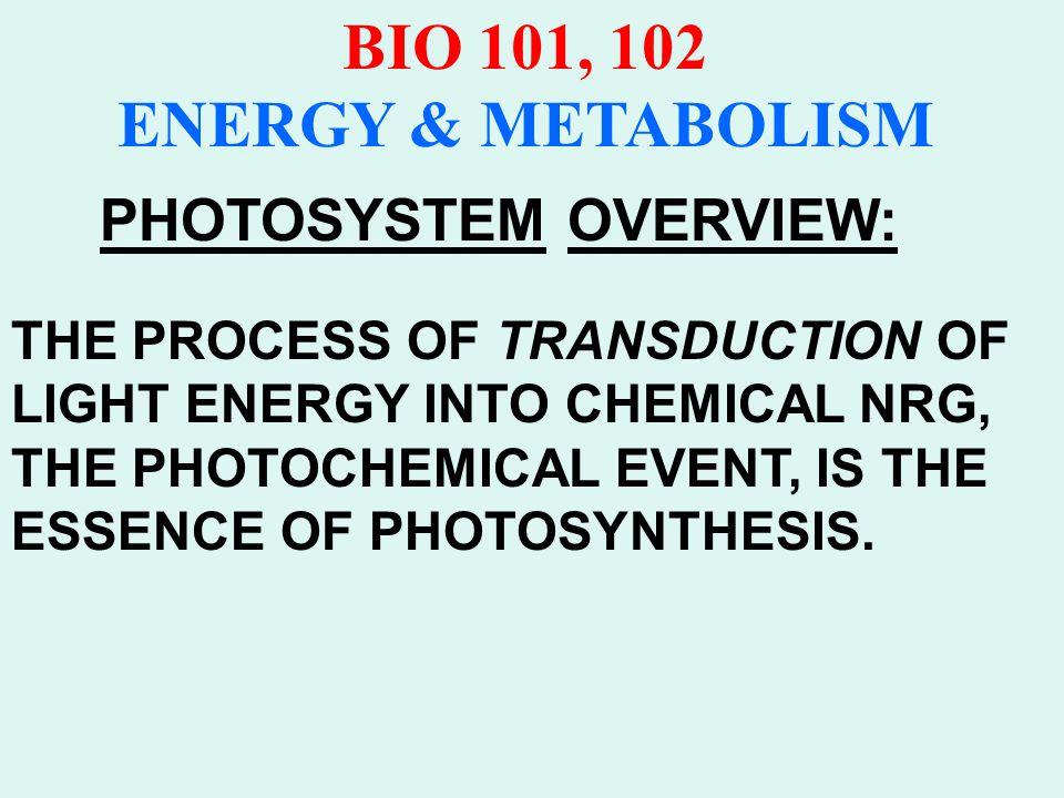 BIO 101, 102 ENERGY & METABOLISM ELECTROMAGNETIC SPECTRUM Visible Light Spectrum Range from 400nm-750nm Gamma rays to Radio Waves Measured in cps (Hertz) λ is symbol for wavelength