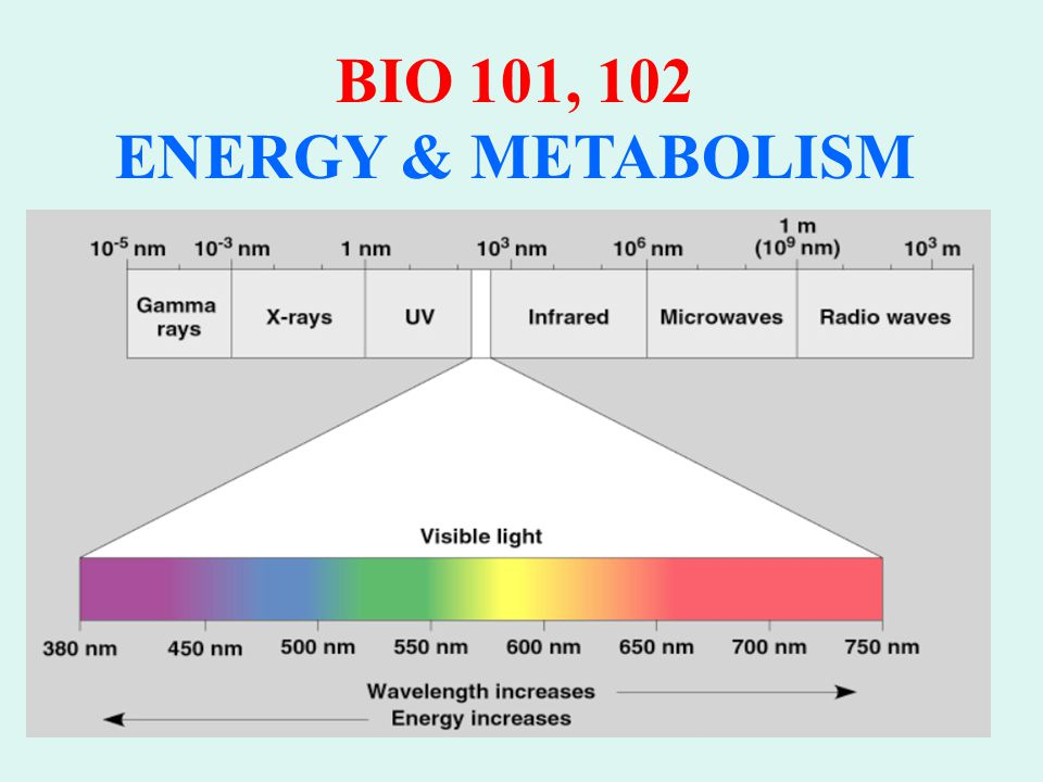 BIO 101, 102 ENERGY & METABOLISM Absorption Spectrum of Chlorophyll a