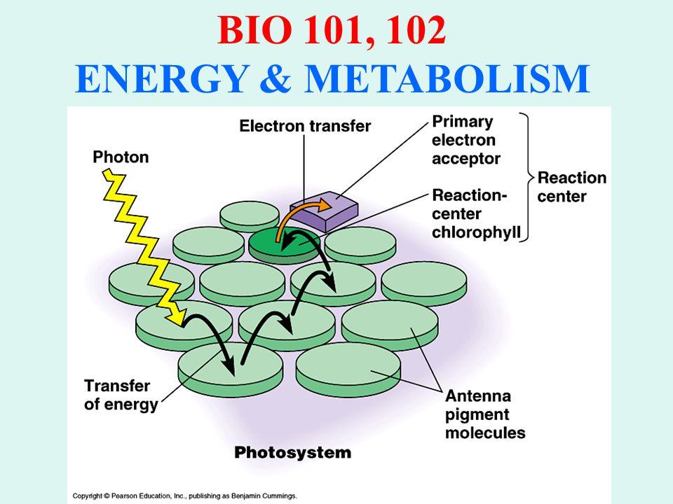 BIO 101, 102 ENERGY & METABOLISM PHOTOSYSTEMS CONSIST OF: 1.