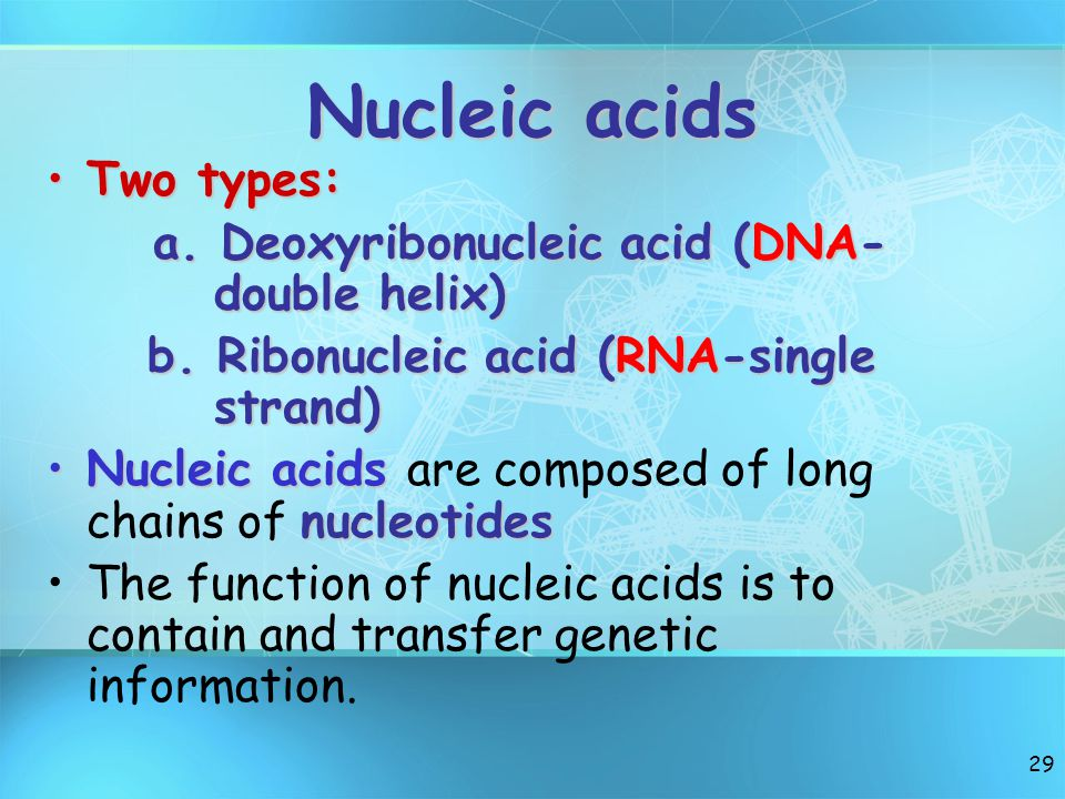 28 Nucleic Acids