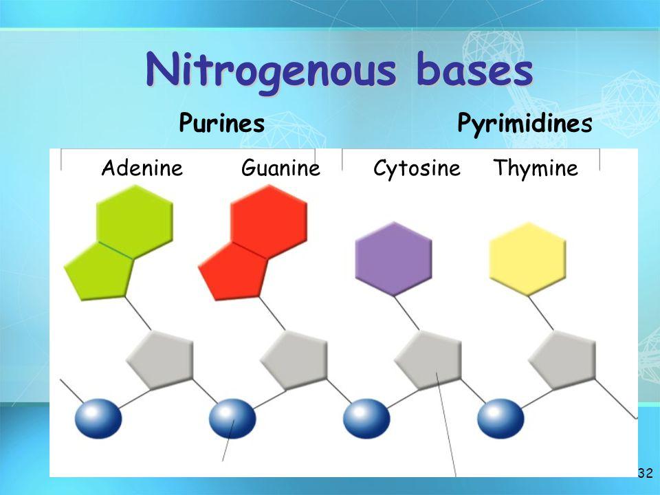 31 A Nucleotide O O=P-O OPhosphate Group Group N Nitrogenous base (A, G, C,T or U) (A, G, C,T or U) CH2 O C1C1 C4C4 C3C3 C2C2 5 Sugar Sugar(deoxyribose)