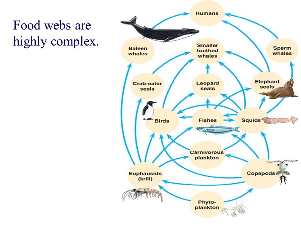Food webs are highly complex.