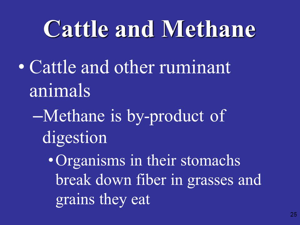 25 Cattle and Methane Cattle and other ruminant animals –Methane is by-product of digestion Organisms in their stomachs break down fiber in grasses and grains they eat