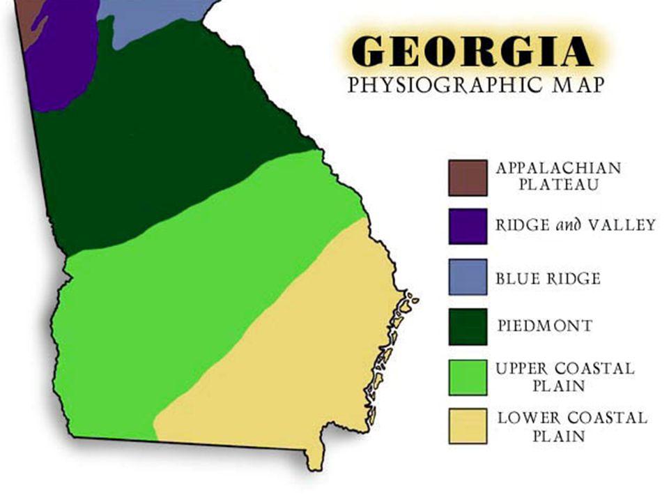 Coastal Plains Vegetation – soil is not fertile.It consist of sand and clay.
