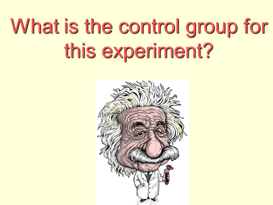 What is the control group for this experiment?