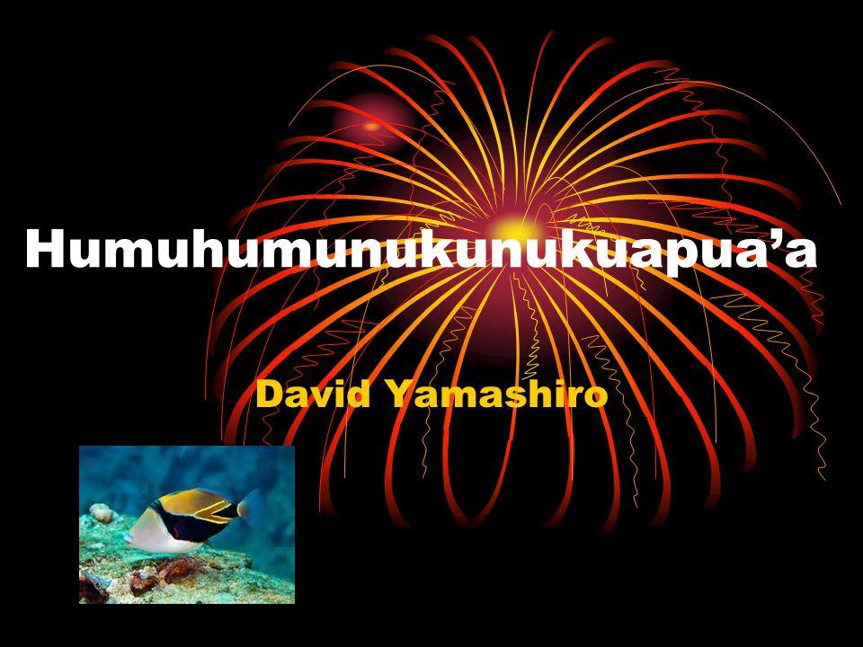 Humuhumunukunukuapua'a David Yamashiro