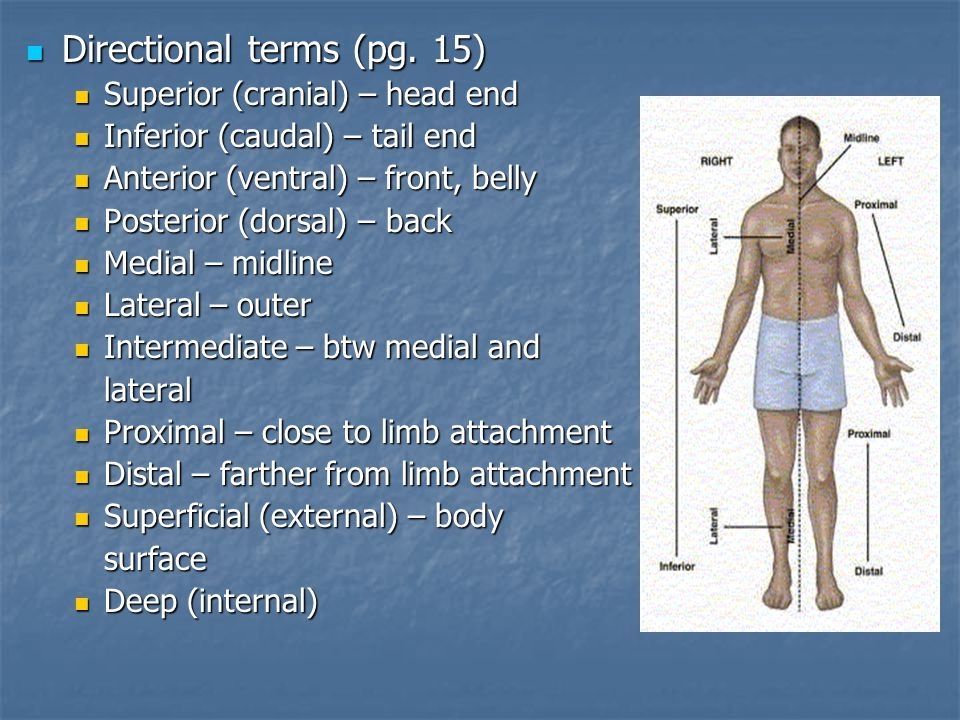 Directional terms (pg.15) Directional terms (pg.