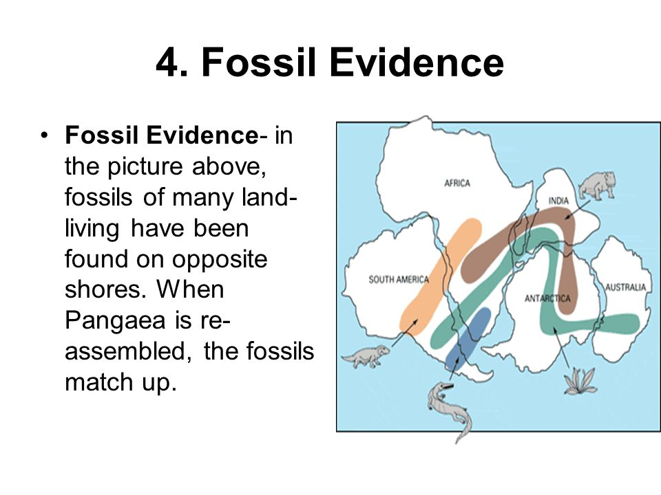 4. Fossil Evidence Fossil Evidence- in the picture above, fossils of many land- living have been found on opposite shores. When Pangaea is re- assembl