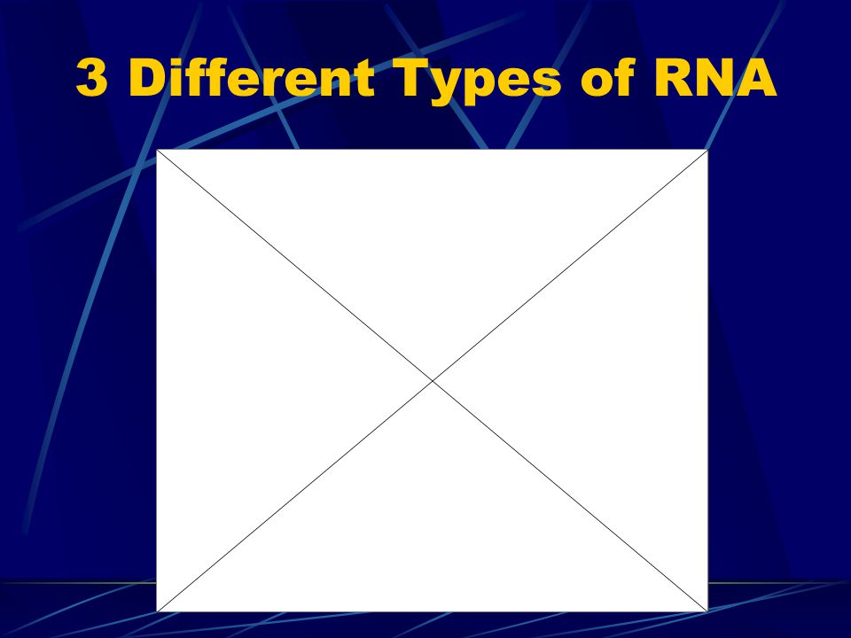 3 Different Types of RNA