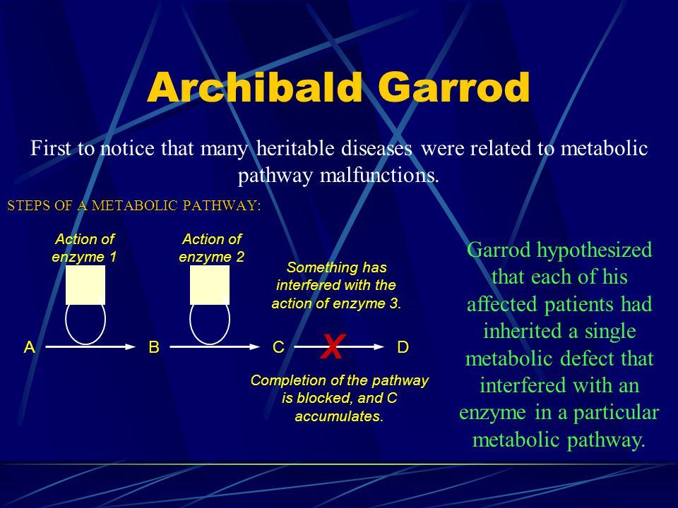 Archibald Garrod STEPS OF A METABOLIC PATHWAY: First to notice that many heritable diseases were related to metabolic pathway malfunctions. ABC X D Ac