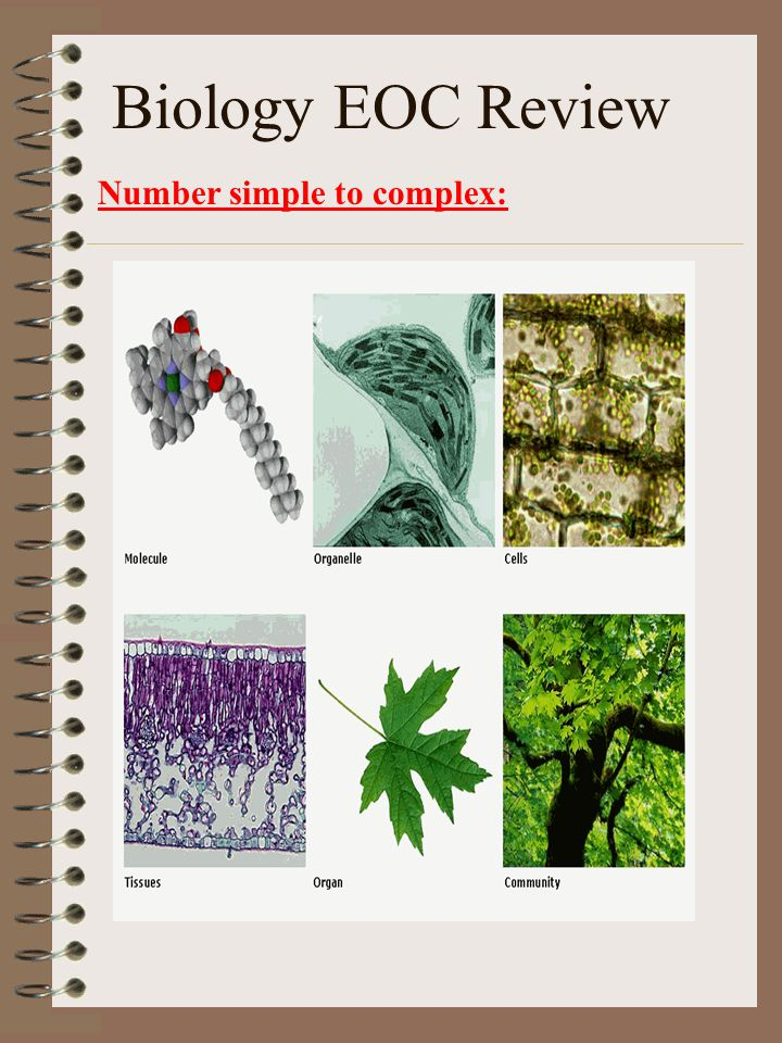 Biology EOC Review Number simple to complex: