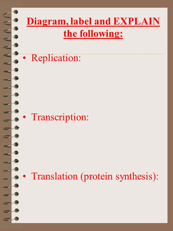 Diagram, label and EXPLAIN the following: Replication: Transcription: Translation (protein synthesis):