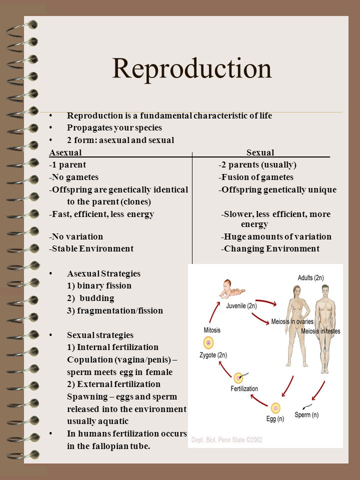 Reproduction Reproduction is a fundamental characteristic of life Propagates your species 2 form: asexual and sexual Asexual Sexual____________ -1 par