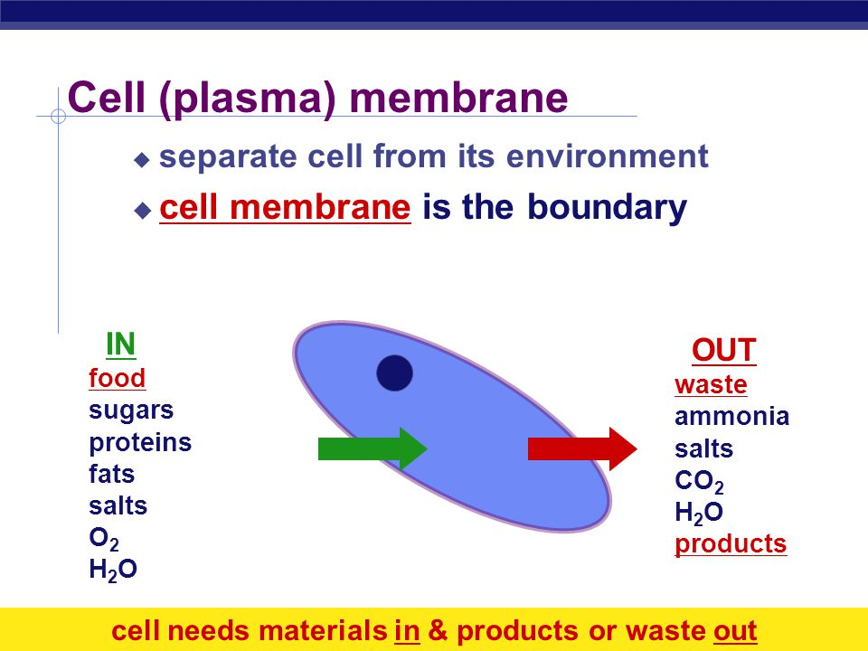 Regents Biology How do you build a semi-permeable cell membrane.
