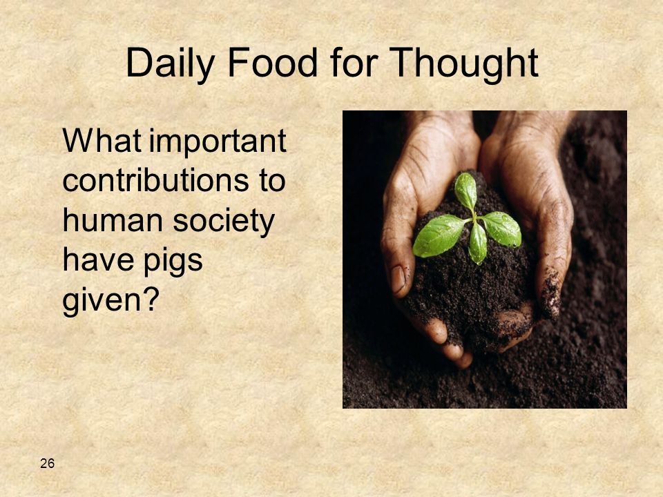 Daily Food for Thought 26 What important contributions to human society have pigs given?