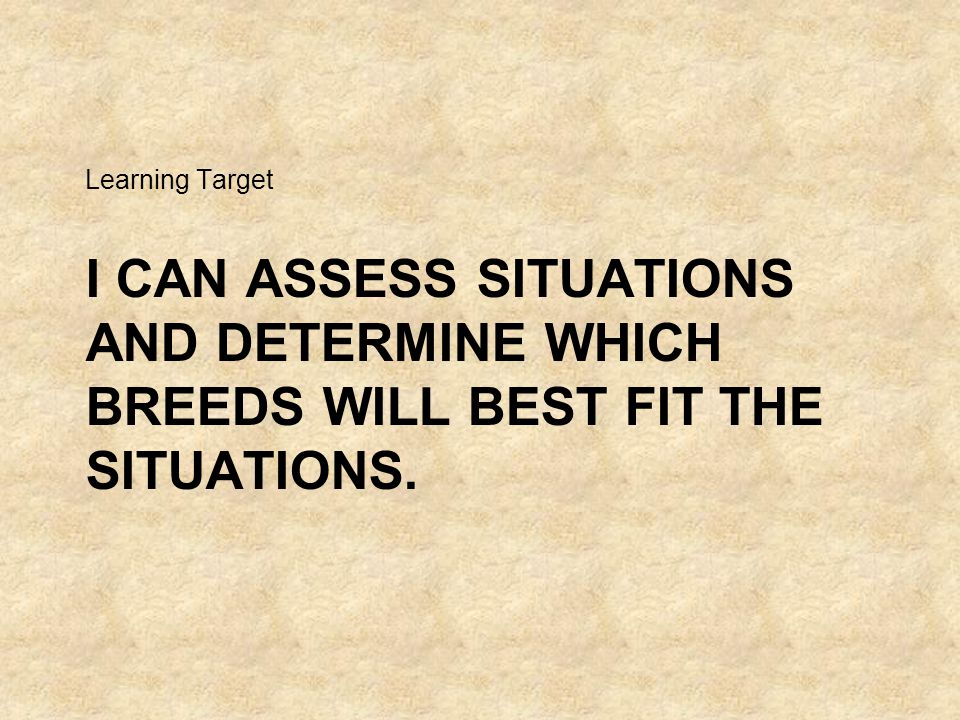 I CAN ASSESS SITUATIONS AND DETERMINE WHICH BREEDS WILL BEST FIT THE SITUATIONS. Learning Target