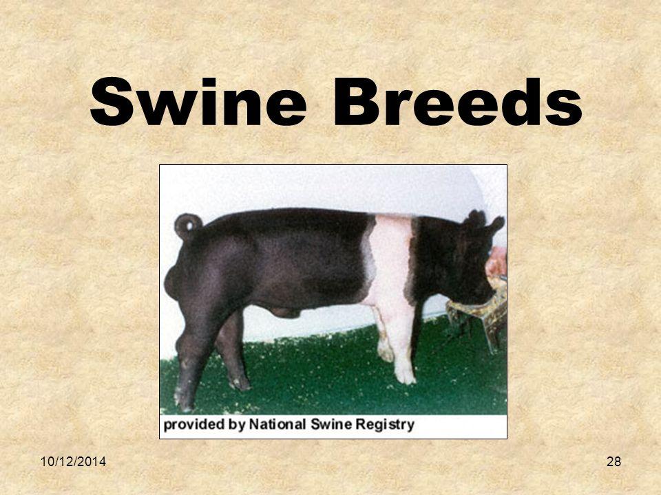 10/12/201428 Swine Breeds