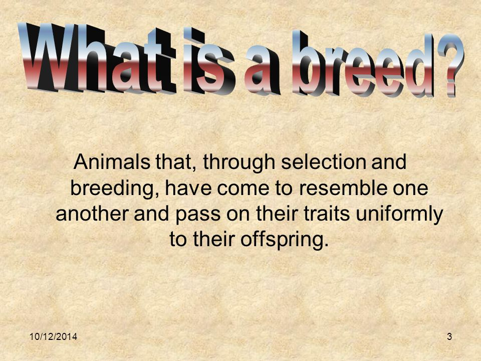 10/12/20143 Animals that, through selection and breeding, have come to resemble one another and pass on their traits uniformly to their offspring.