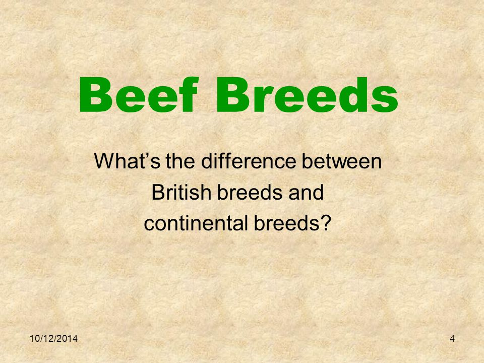 DESIGN YOUR OWN BEEF OPERATION AND SELECT TWO BREEDS TO CROSSBREED.
